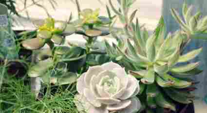 An in-depth guide on how to propagate succulents.