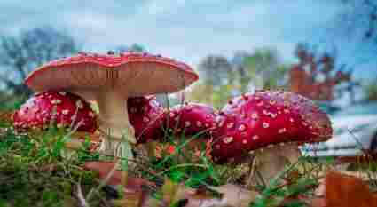 An in-depth guide to the different types of poisonous mushrooms