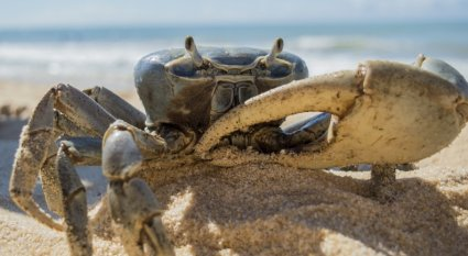 An in-depth guide on how to succeed at crab fishing.