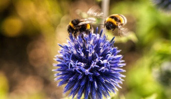 An in-depth guide on how to use your garden to help save the bees.