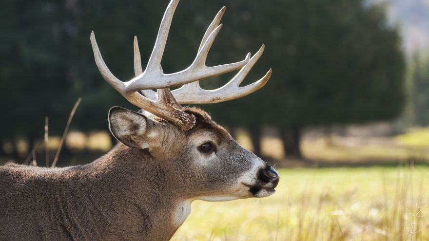 An in-depth guide on the basics of mule deer hunting.