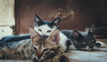 An in-depth look at the most common cat breeds and their personality traits.