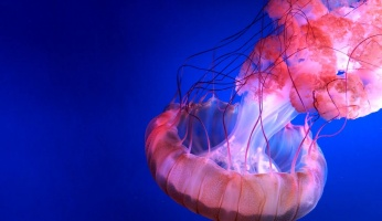 An in-depth guide on various jellyfish sting treatment. options.