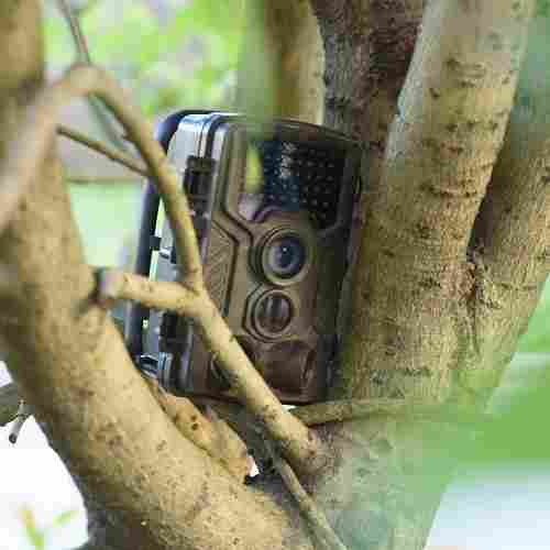 placing a hidden camera for hunting