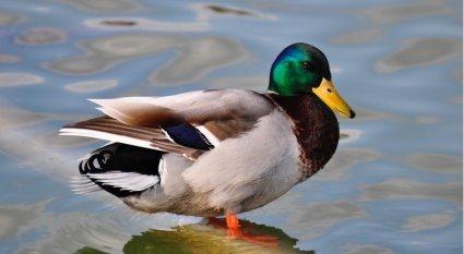 An in-depth review of duck hunting boats.