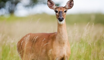 Why Hunting Mature Bucks and Deer Hunting Is Completely Different