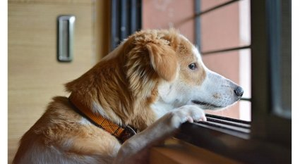 An in-depth guide on how to prevent dog separation anxiety.