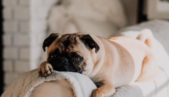 An in-depth review of why your dog needs exercise.