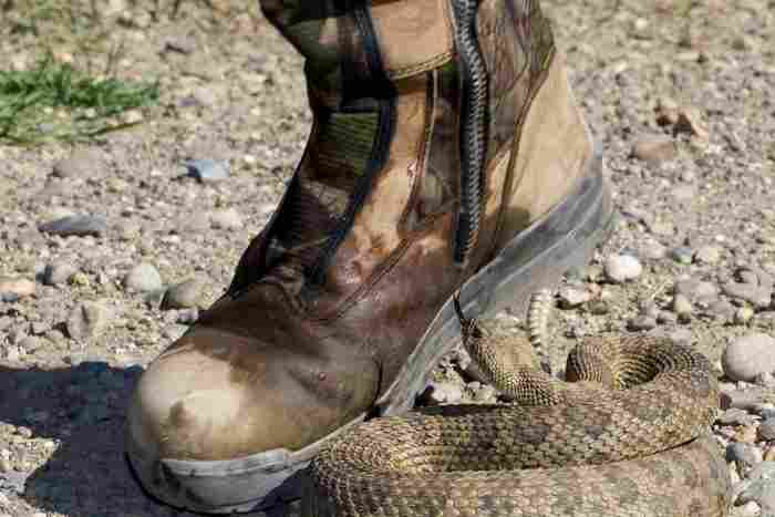 snake proof boots reviews