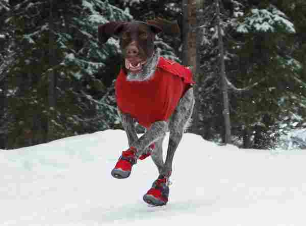 snow boots for dogs
