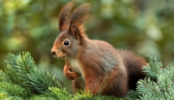 An in-depth guide to the best squirrel deterrent ideas.