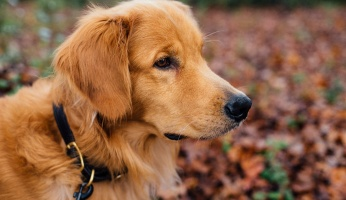 An in-depth review of e-collars for dogs.