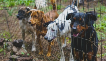 An in-depth review of dog boarding.