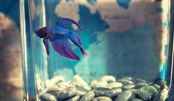 An in-depth review of freshwater aquariums.