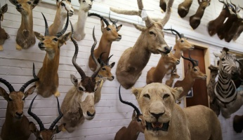 Trophy Hunting: Is it Ethical?